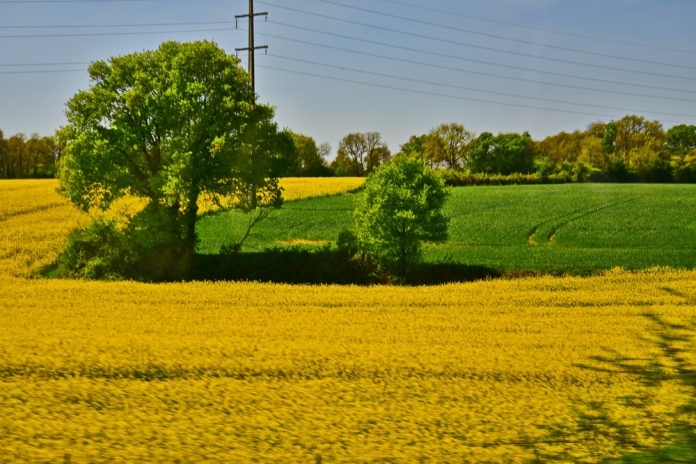 750_2244rapeseed__resize
