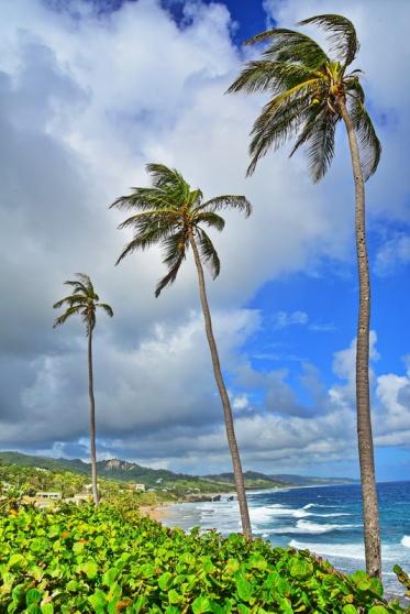 12242017_Barbados_3-Palm_Trees_Ocean_750_0048_resize