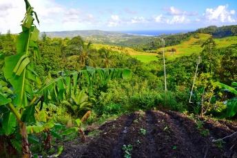 12242017_Barbados_Scottish_Higtlands_750_0026_resize