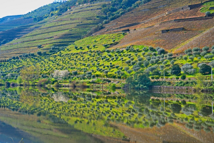 04142018_Pinhao-Portugal_Olive-grove_Reflection_750_6470_resize